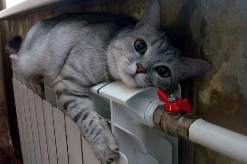 radiator-otopleniya-dlya-kvartiryi