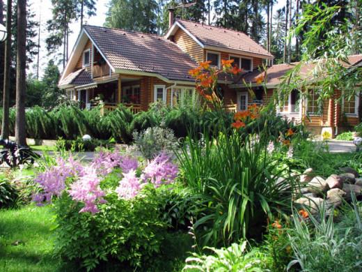 Многолетние растения для дачи
