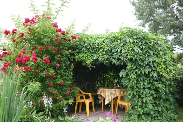 Фото многолетних цветов для сада