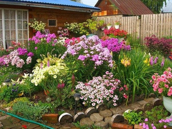Многолетние цветы и растения для дачи ...: designdachi.ru/mnogoletnie-cvety-i-rasteniya-dlya-dachi-i-sada-ix...
