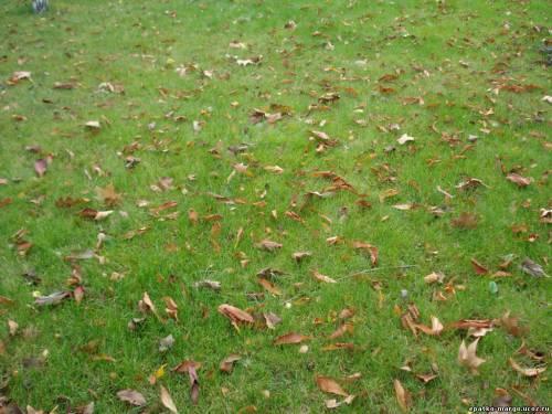 подготовка газона к зиме