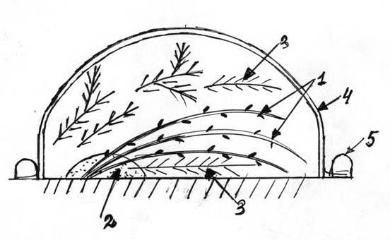 укрытие гортензии на зиму лапником