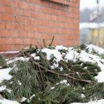 гортензия укрытие на зиму фото