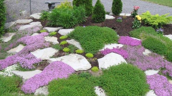 стелющиеся растения для альпийской горки