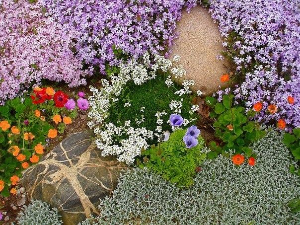 цветущие растения для альпийской горки