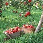 чтобы деревья плодоносили