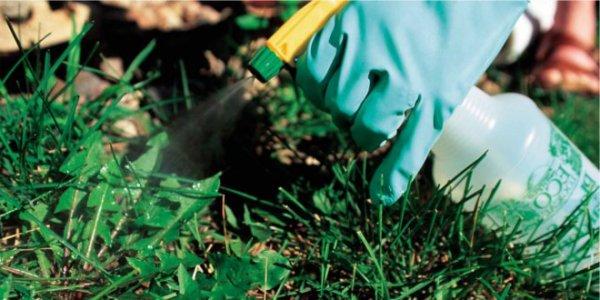 Химические препараты для уничтожения сорняков