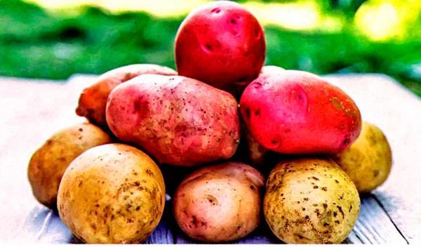 10 правил богатого урожая картофеля