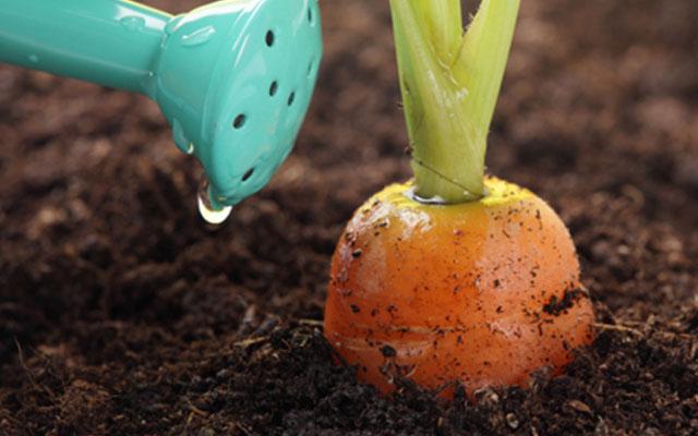 Какой полив такой и урожай