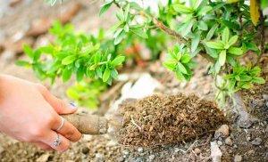 Осенняя подкормка растений