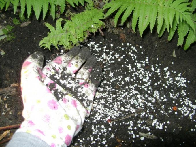 Осенняя подкормка растений минеральными удобрениями