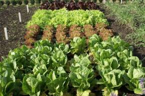 Что можно посадить в огороде в сентябре