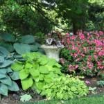 Какие растения будут расти в тени