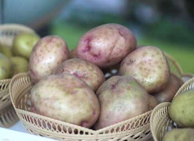 сорта картофеля для хранения