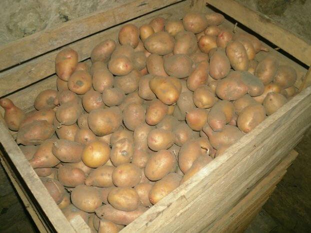 Хранение картофеля в погребе в ящиках