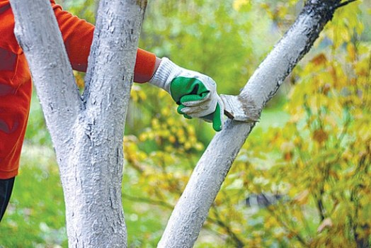 Белим деревья во второй половине октября