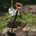Готовим посадочные ямы с осени
