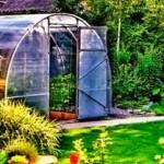 Как улучшить почву в теплице?