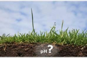 Определяем кислотность почвы по растениям