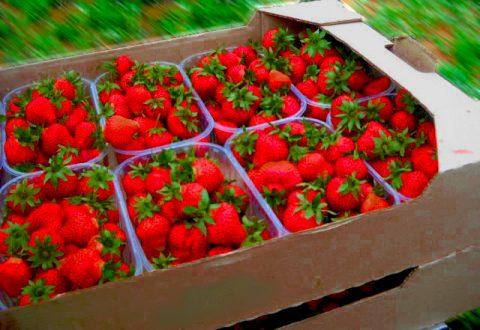 ягоды в упаковке из гофрокартона