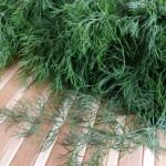 Как вырастить зимой в теплице витаминную зелень
