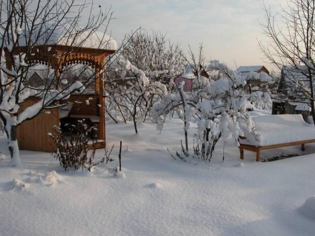 Зимние заботы в саду