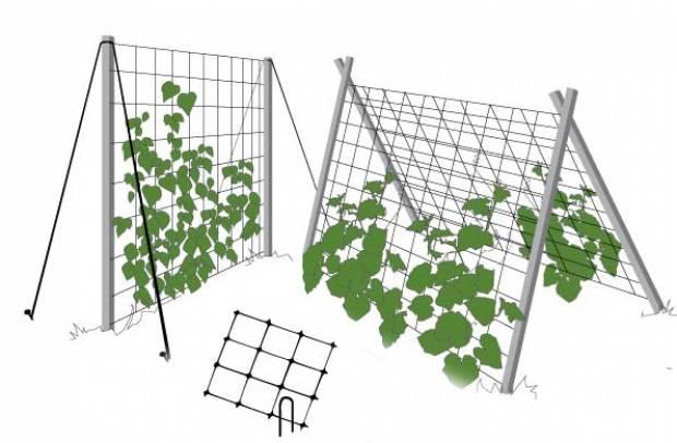 устройство шпалеры для выращивания огурцов