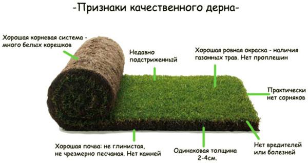 Качественные рулонные газоны