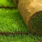 Описание рулонных газонов
