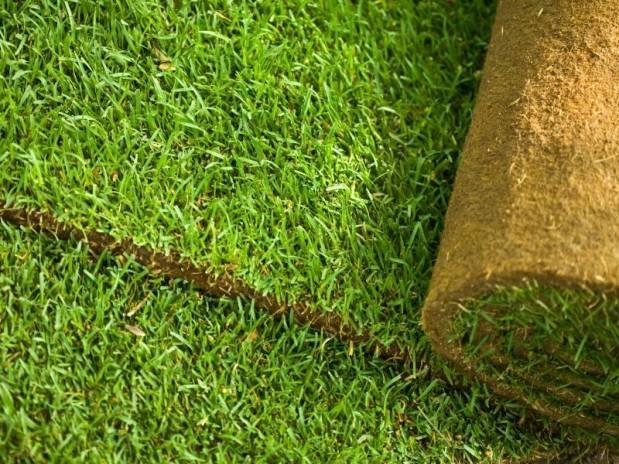 Рулонный газон: в чем его преимущества