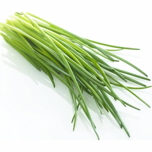 Зеленый лук без хлопот
