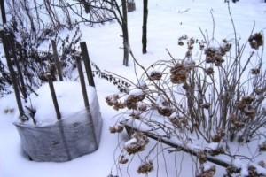 снежком окучиваю