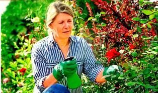 Методы борьбы с тлей в саду