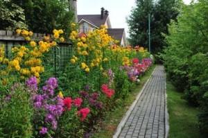 Посадки растений вдоль забора