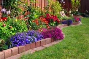 Яркие цветущие цветы