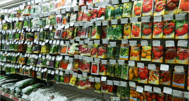 Продажа семян и рассады 159