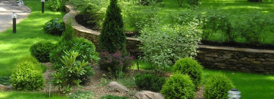 Оформление клумбы хвойными растениями