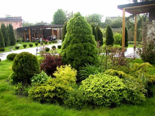 Клумбы из хвойных растений. Посадка, виды и их преимущества
