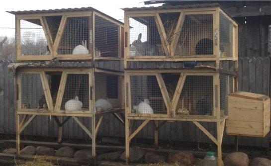 Крольчатник на даче: как построить его своими руками?