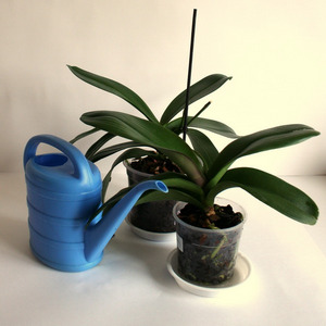 Какой водой можно поливать орхидею