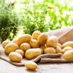 5 правил получения хорошего урожая картофеля
