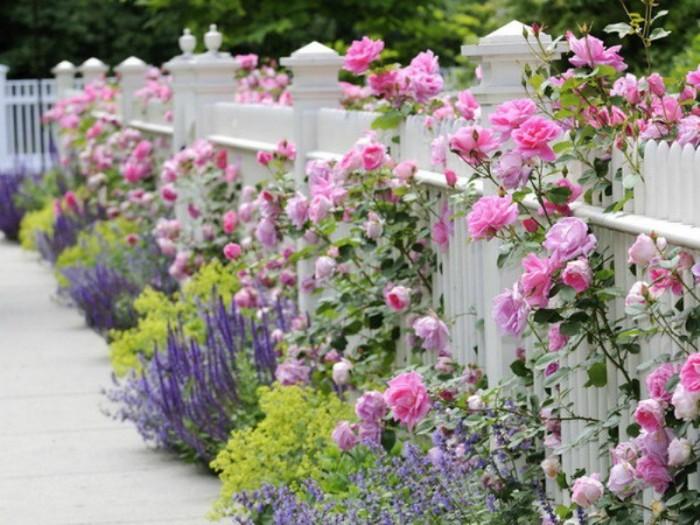 красивый забор, который будет радовать ярким цветением