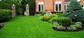 Партерный газон: его особенности, выбор трав, тонкости ухода