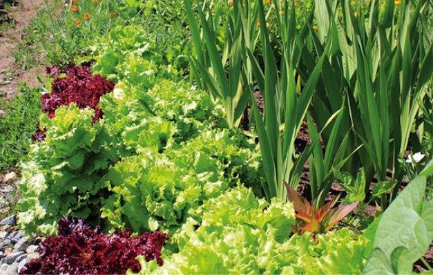 Основные правила посадки овощей на огороде