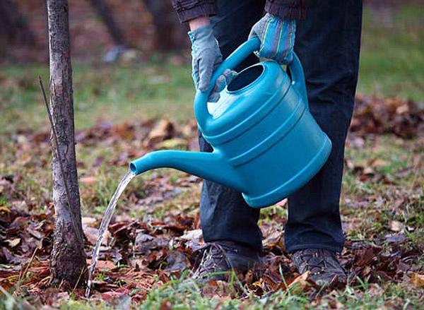 полив плодовых деревьев в саду перед зимой