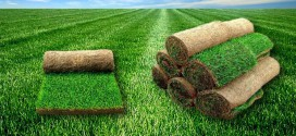 Как ухаживать за рулонным газоном сразу после его укладки?