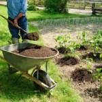 Применение конского навоза в качестве удобрения на огороде