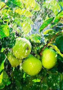 Как правильно поливать сад