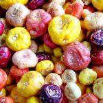 как правильно купить луковицы цветов