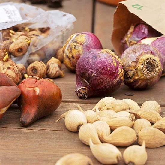 как выбрать и купить луковицы цветов